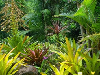 Melbourne's Largest Tropical Nursery (Freehold) Wholesale business, Turnover $61,000+ p/w (15160)